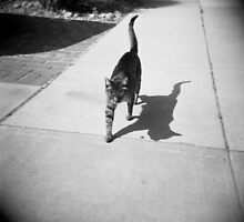 cat shadow by irisphotography