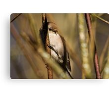 A Litte Bird Amidst the Branches Canvas Print