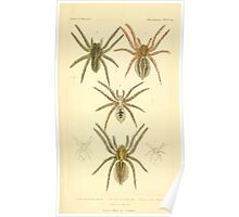 The Animal Kingdom by Georges Cuvier, PA Latreille, and Henry McMurtrie 1834  391 - Arachnides Arachnids Poster