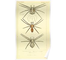 The Animal Kingdom by Georges Cuvier, PA Latreille, and Henry McMurtrie 1834  373 - Arachnides Arachnids Poster