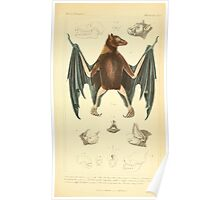 The Animal Kingdom by Georges Cuvier, PA Latreille, and Henry McMurtrie 1834 577 - Mammalia Mammals Poster