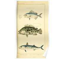 The Animal Kingdom by Georges Cuvier, PA Latreille, and Henry McMurtrie 1834  147 - Pisces Fish Poster