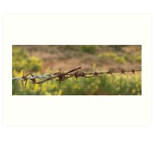 Barbed wre, oblong, close up. Art Print