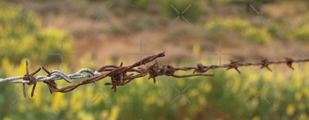 Barbed wre, oblong, close up. by brians101