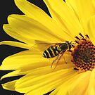 Sunny Sunday! by VickiOBrien