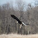 Bald Eagle Fish For Dinner by Deb Fedeler