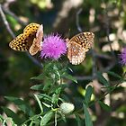 Butterfly Thistle by RainWolf