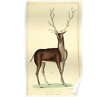 The Animal Kingdom by Georges Cuvier, PA Latreille, and Henry McMurtrie 1834 630 - Mammalia Mammals Poster