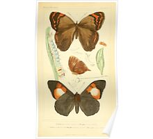 The Animal Kingdom by Georges Cuvier, PA Latreille, and Henry McMurtrie 1834  508 - Insecta Insects Poster