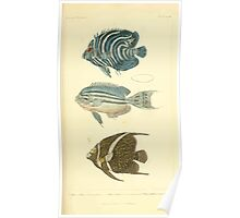 The Animal Kingdom by Georges Cuvier, PA Latreille, and Henry McMurtrie 1834  119 - Pisces Fish Poster