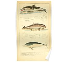 The Animal Kingdom by Georges Cuvier, PA Latreille, and Henry McMurtrie 1834 639 - Mammalia Mammals Poster