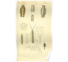 The Animal Kingdom by Georges Cuvier, PA Latreille, and Henry McMurtrie 1834  349 - Crustacea Crustaeans Poster