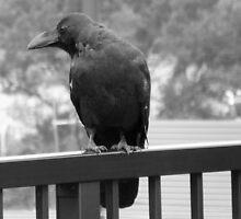 Raven by jHYtse