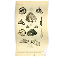 The Animal Kingdom by Georges Cuvier, PA Latreille, and Henry McMurtrie 1834  234 - Mollusca Mollusks Poster