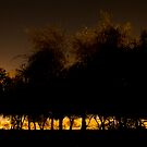 Trees at Night by Joseph Najm