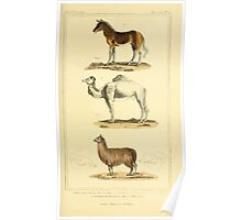 The Animal Kingdom by Georges Cuvier, PA Latreille, and Henry McMurtrie 1834 626 - Mammalia Mammals Poster
