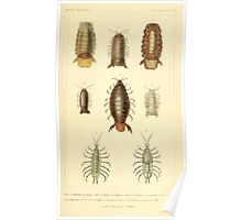 The Animal Kingdom by Georges Cuvier, PA Latreille, and Henry McMurtrie 1834  351 - Crustacea Crustaeans Poster