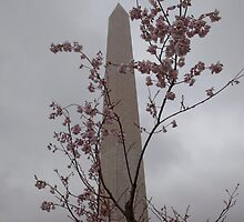Washington Monument by Judson Joyce