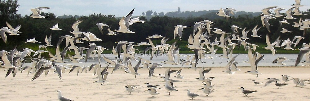 Bird flock at Byron Bay by sunset