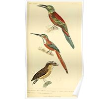 The Animal Kingdom by Georges Cuvier, PA Latreille, and Henry McMurtrie 1834 704 - Aves Avians Birds Poster