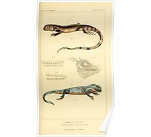 The Animal Kingdom by Georges Cuvier, PA Latreille, and Henry McMurtrie 1834  020 - Reptilia Reptiles Poster