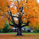 Fall Stands Tall  by foxyphotography