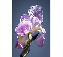 A Sky Full of Iris Photographic Print