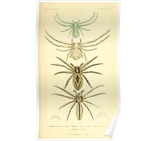 The Animal Kingdom by Georges Cuvier, PA Latreille, and Henry McMurtrie 1834  375 - Arachnides Arachnids Poster