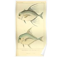 The Animal Kingdom by Georges Cuvier, PA Latreille, and Henry McMurtrie 1834  143 - Pisces Fish Poster