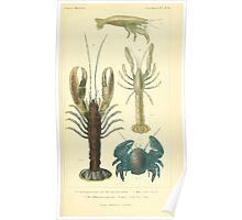 The Animal Kingdom by Georges Cuvier, PA Latreille, and Henry McMurtrie 1834  336 - Crustacea Crustaeans Poster