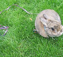 Cutie Bunny by Lesley Ortiz