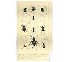 The Animal Kingdom by Georges Cuvier, PA Latreille, and Henry McMurtrie 1834  450 - Insecta Insects Poster