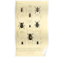 The Animal Kingdom by Georges Cuvier, PA Latreille, and Henry McMurtrie 1834  452 - Insecta Insects Poster