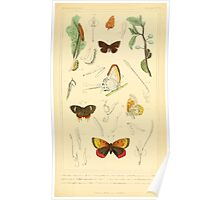 The Animal Kingdom by Georges Cuvier, PA Latreille, and Henry McMurtrie 1834  510 - Insecta Insects Poster