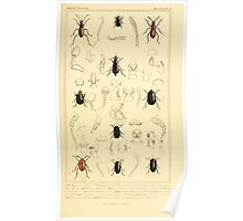 The Animal Kingdom by Georges Cuvier, PA Latreille, and Henry McMurtrie 1834  438 - Insecta Insects Poster