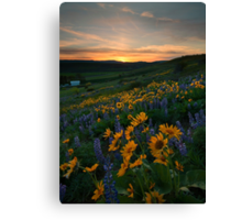 Blue and Gold Sunset Canvas Print