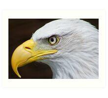 Bald Eagle Macro........ Art Print