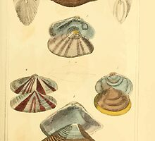 The Animal Kingdom by Georges Cuvier, PA Latreille, and Henry McMurtrie 1834  272 - Mollusca Mollusks by wetdryvac