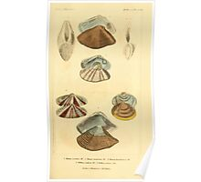 The Animal Kingdom by Georges Cuvier, PA Latreille, and Henry McMurtrie 1834  272 - Mollusca Mollusks Poster