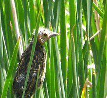 Baby Redwinged Black Bird ~ First Brood by CynLynn