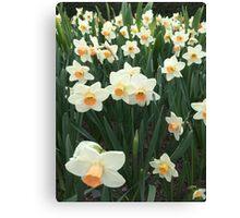 Daffodils, NYC Canvas Print