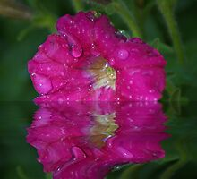 Wet Petunia by Rick  Friedle