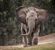 Juvenile Out for a Stroll by TREXimages