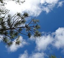 Sky Pine by Robert Bruce Anderson