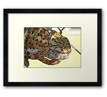 Chameleon Hanging On A Wire Fence Framed Print