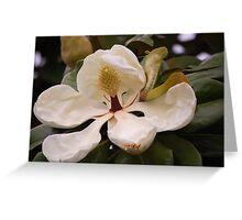 Magnolia Blossom: Greeting Card