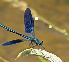 Deep Blue Wings by Robert Abraham