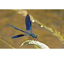 Deep Blue Wings Photographic Print