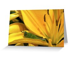 Grasshopper with Lily Greeting Card