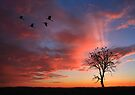 Open Billed Storks at Sunset, Botswana, Africa. by PhotosEcosse